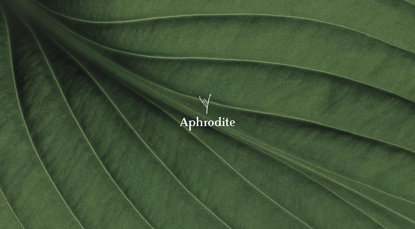 Aphrodite婚紗品牌VI形象設計欣賞-深圳VI設計1